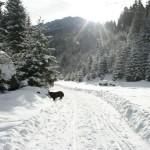 Pe drumuri de munte, pensiunea La Craita, Bran
